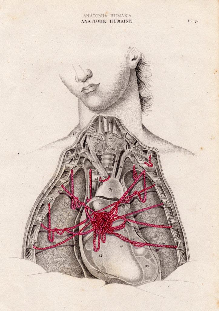 Manuel Antonio Dominguez Gomez - anatomia